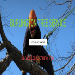 Burlington Tree Service